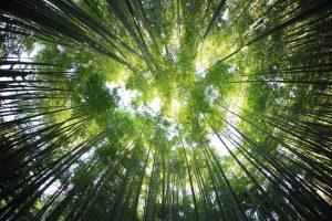 SDG 15: Vita sulla Terra